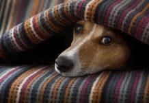 CRMV-SP orienta cuidados extras com os pets no inverno