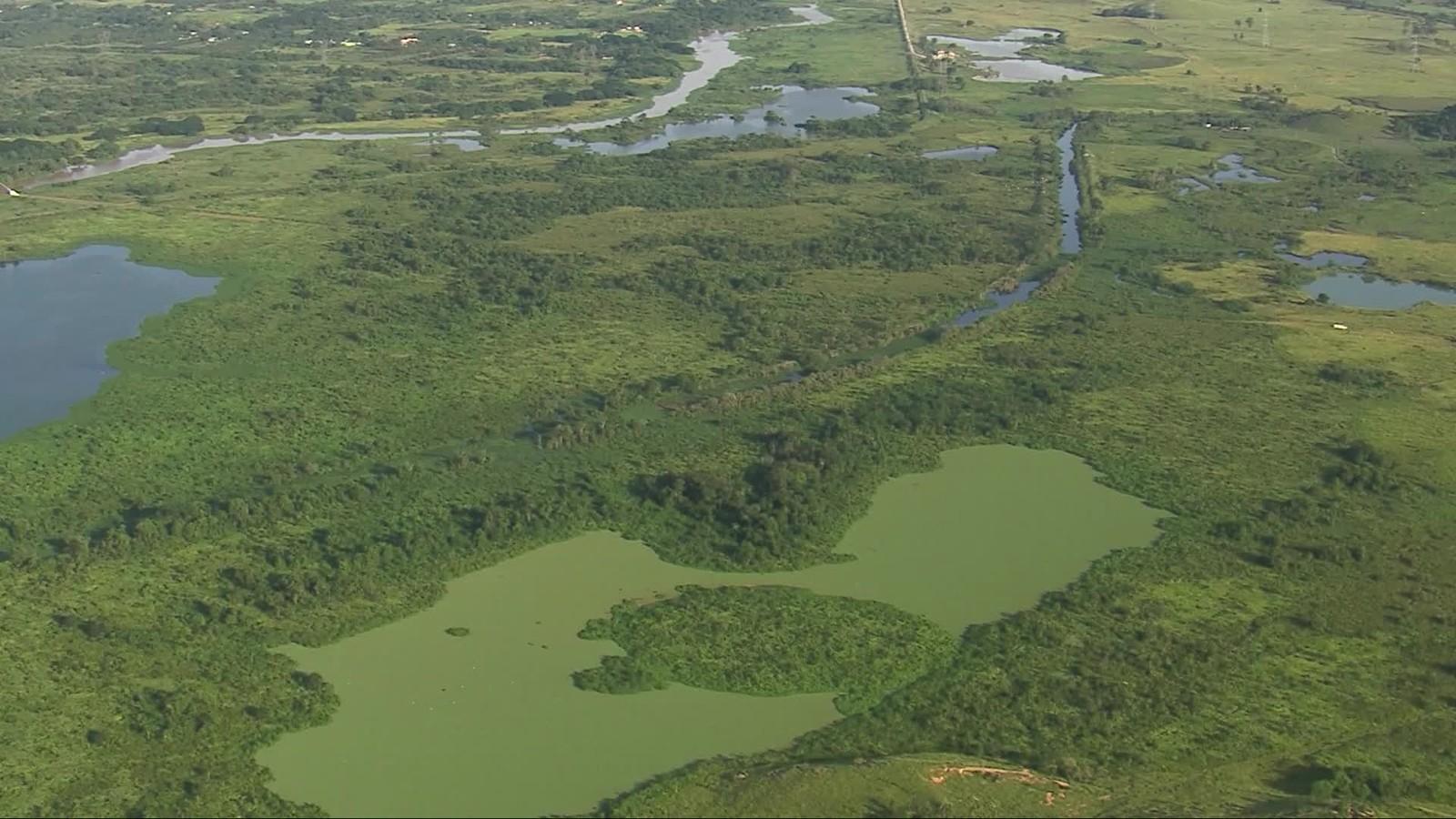 Lago coberto de algas - Guadu