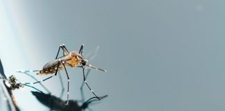 Cuidados com a caixa d'água na prevenção da Dengue, Chikungunya e Zika