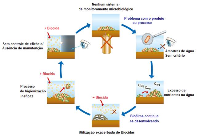 Ciclo de contaminação do Biofilme