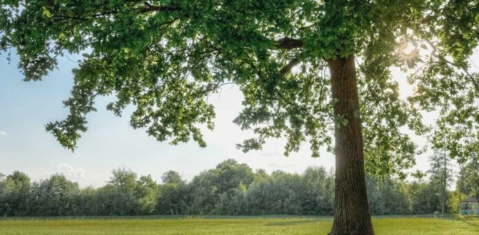 A natureza alivia o estresse