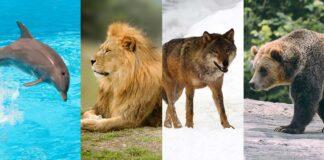 Golfinhos, leões, lobos ou ursos