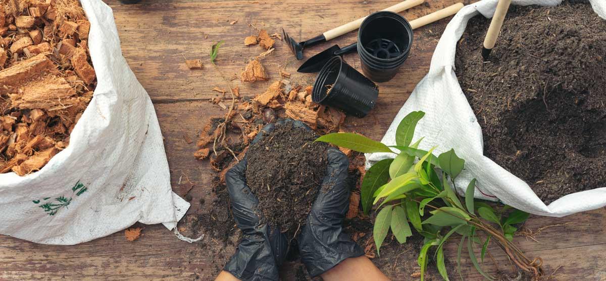 Como começar a sua horta em casa?