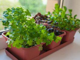 Como fazer uma horta em casa? Chega de verduras murchando na geladeira!