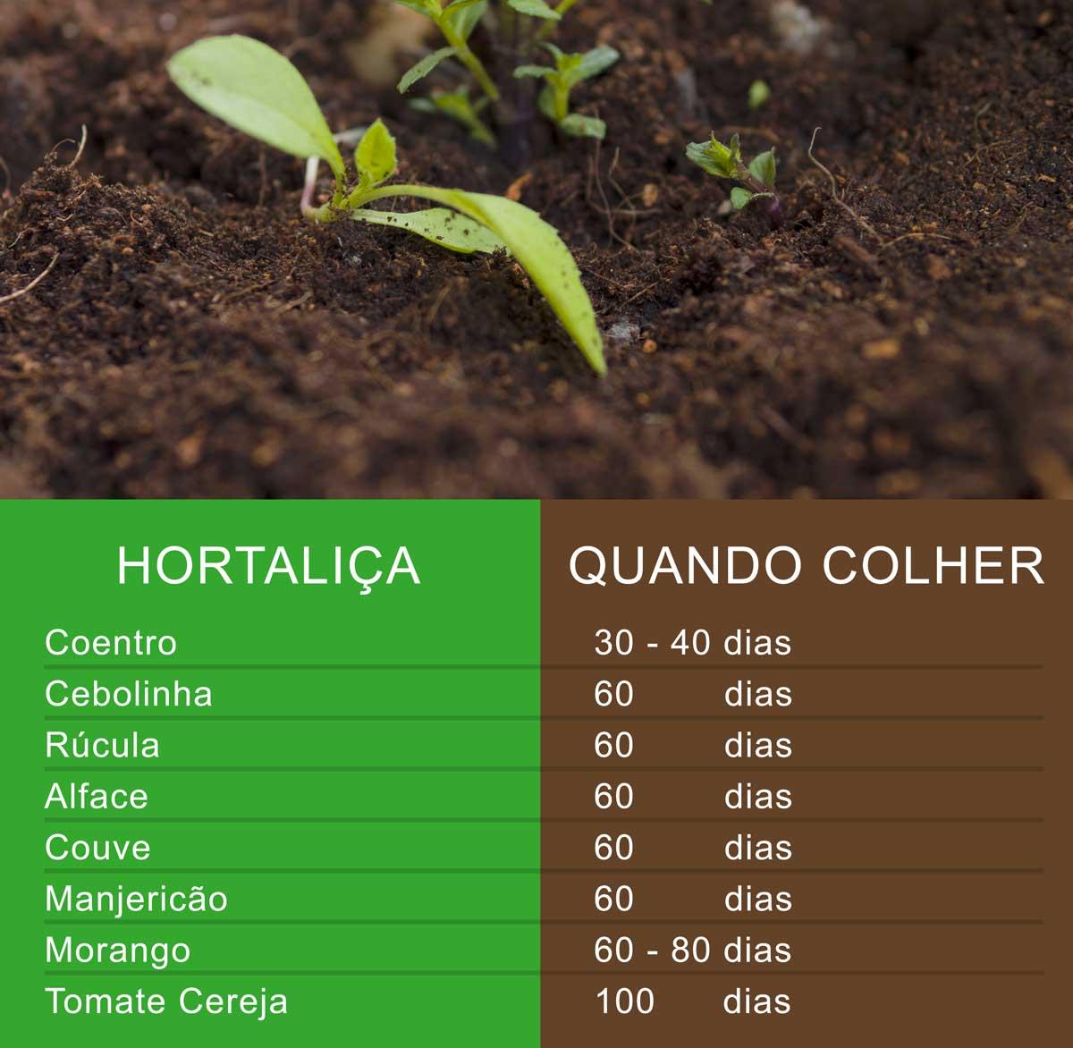 O que plantar em casa