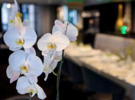 Os diferentes significados de cada cor das orquídeas