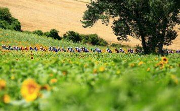 Curiosidades sobre o Tour de France e seus 114 anos de história